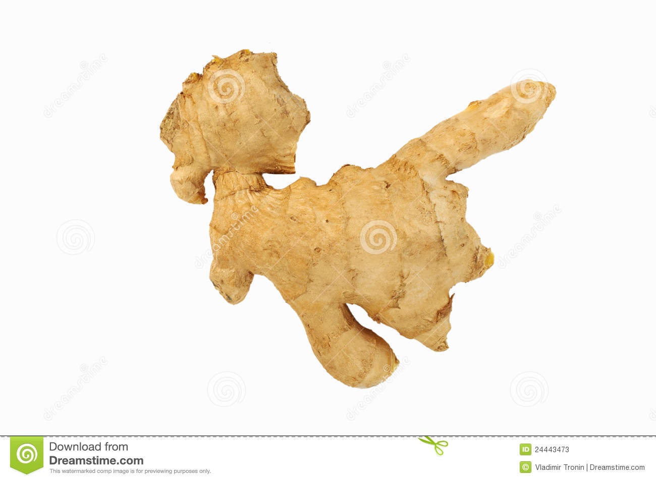 Ginger Root Stock Photos   Image  24443473