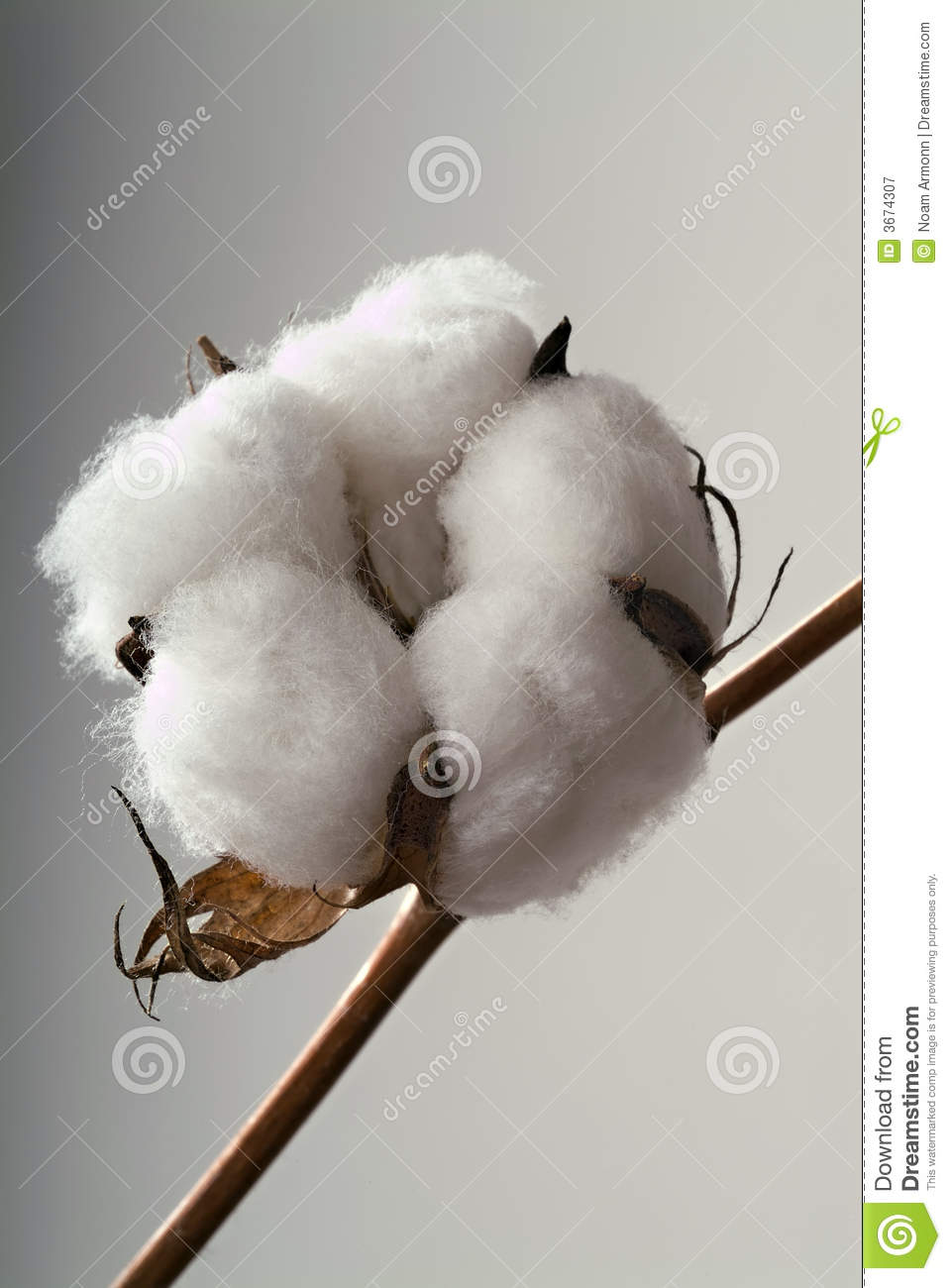 Cotton Ball Clipart Cotton Ball