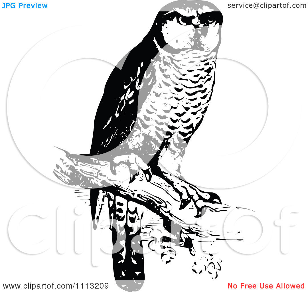 Clipart Vintage Black And White Perched Owl   Royalty Free Vector