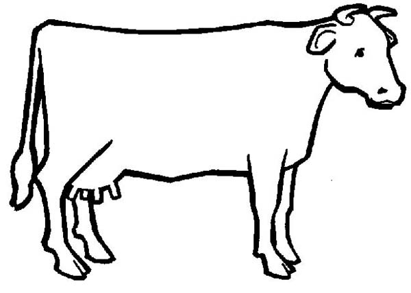 Cow Outline   Clipart Best