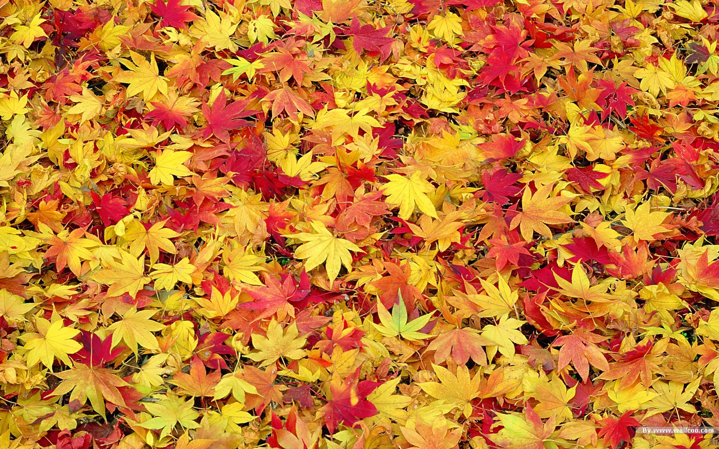 fall scenery clipart clipart suggest