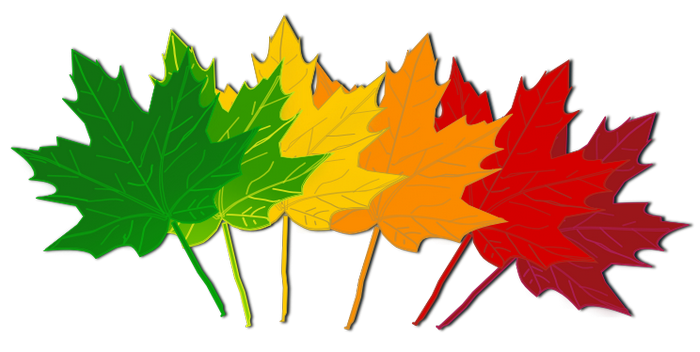 How About     Fall Leaves Clip Art