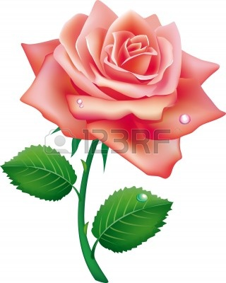 Of Single Rose Clipart