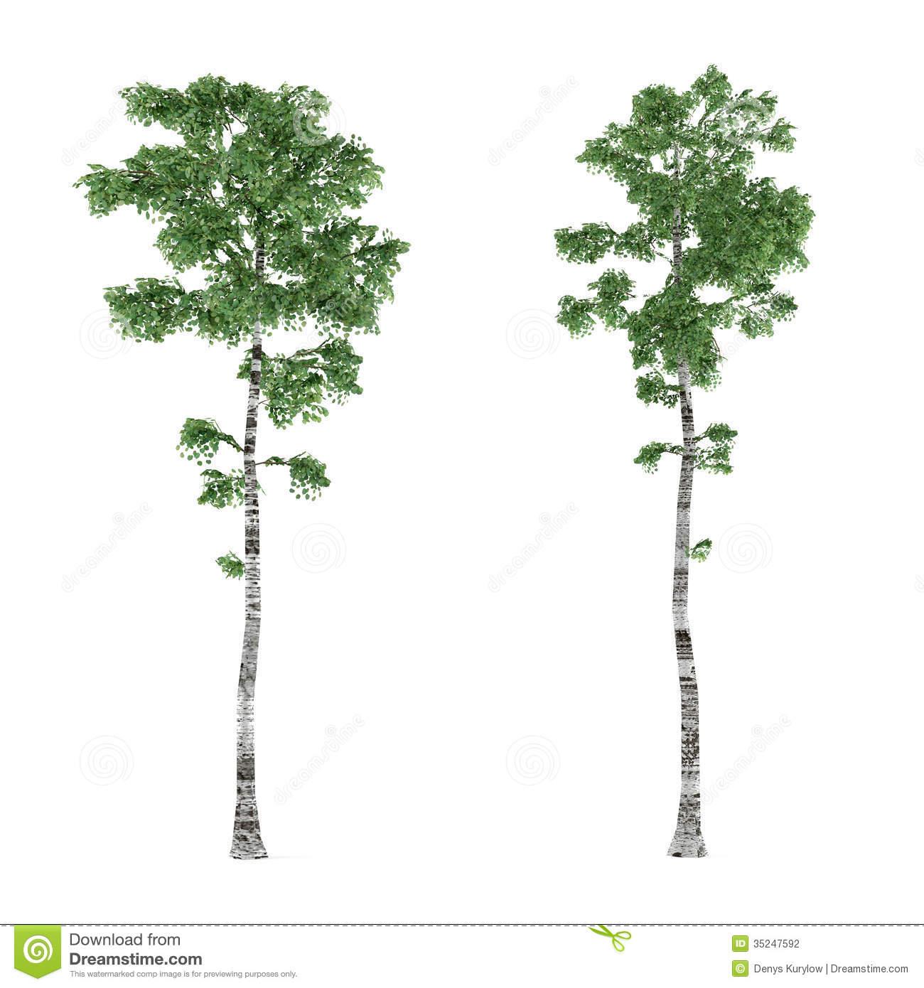 Birch tree background clip fbuize clipart kid