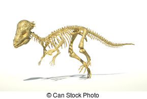 Pachycephalosaurus Dinosaur Full Photo Realistic Skeleton