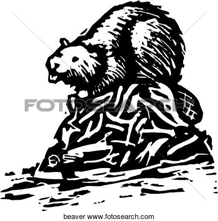 Clipart Of Beaver Beaver   Search Clip Art Illustration Murals