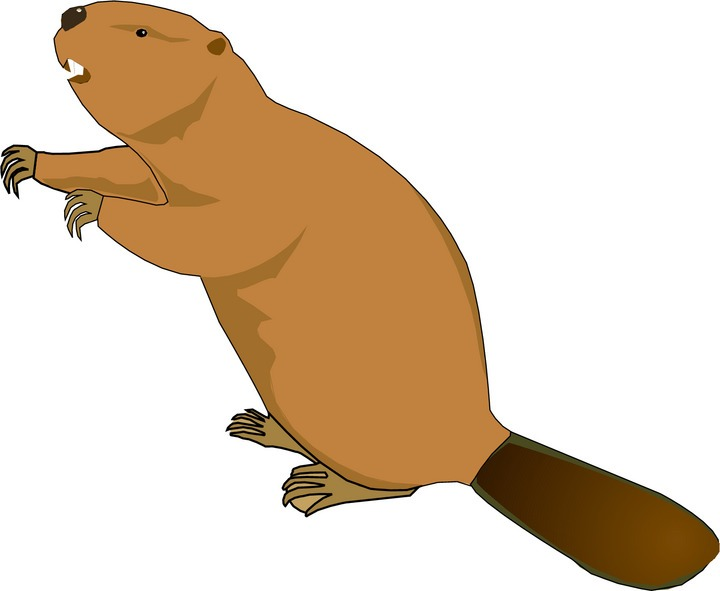 Free Beaver Clipart