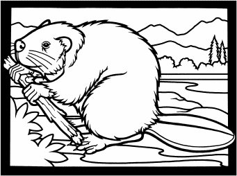 Free Beaver W Branch 1 Clipart   Free Clipart Graphics Images And