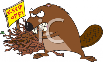 Images Animal Clipart Net Clipart Picture Of A Beaver Guarding His Dam