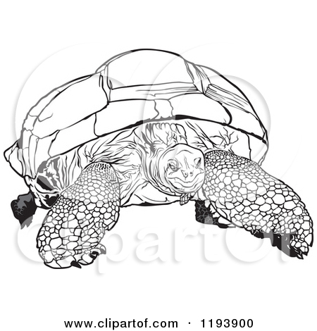 Clipart Of A Black And White Aldabra Giant Tortoise   Royalty Free