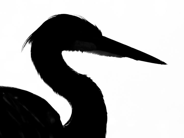 Heron Silhouette Clipart - Clipart Kid