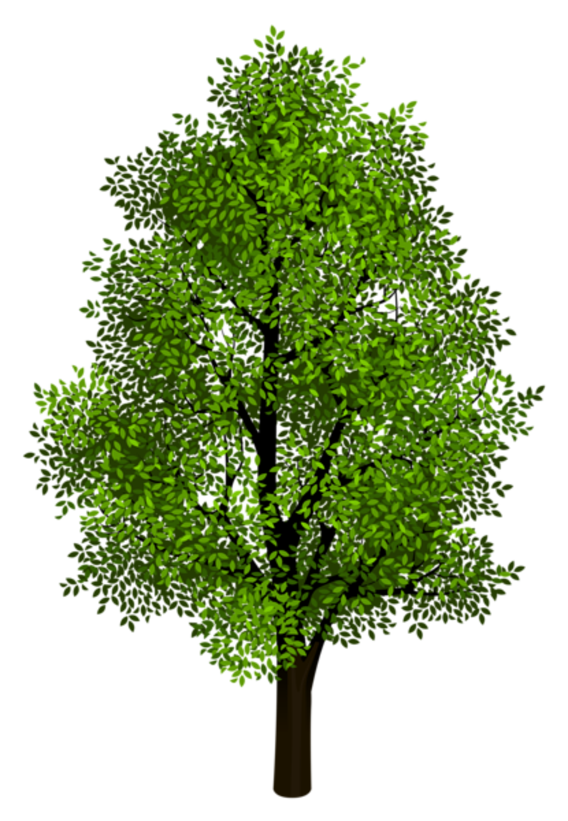 free png Tree Clipart images transparent