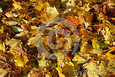 Funny Autumn Stock Image