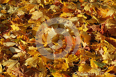 Funny Autumn Stock Photography