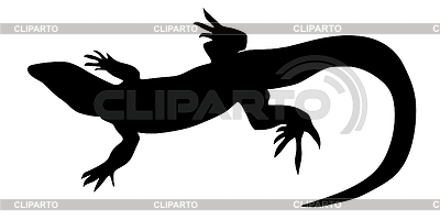 Lizard   Stock Photos And Vektor Eps Clipart   Cliparto