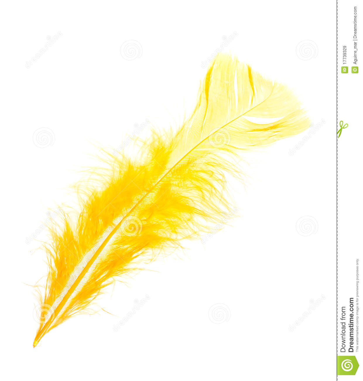 Yellow Feather Royalty Free Stock Images   Image  17739329