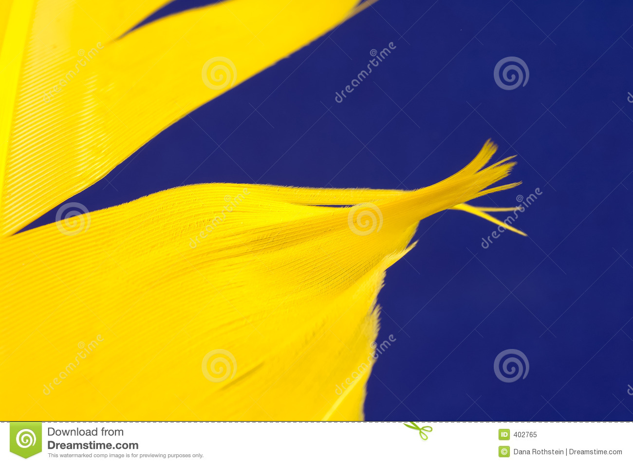 Yellow Feather Royalty Free Stock Photo   Image  402765