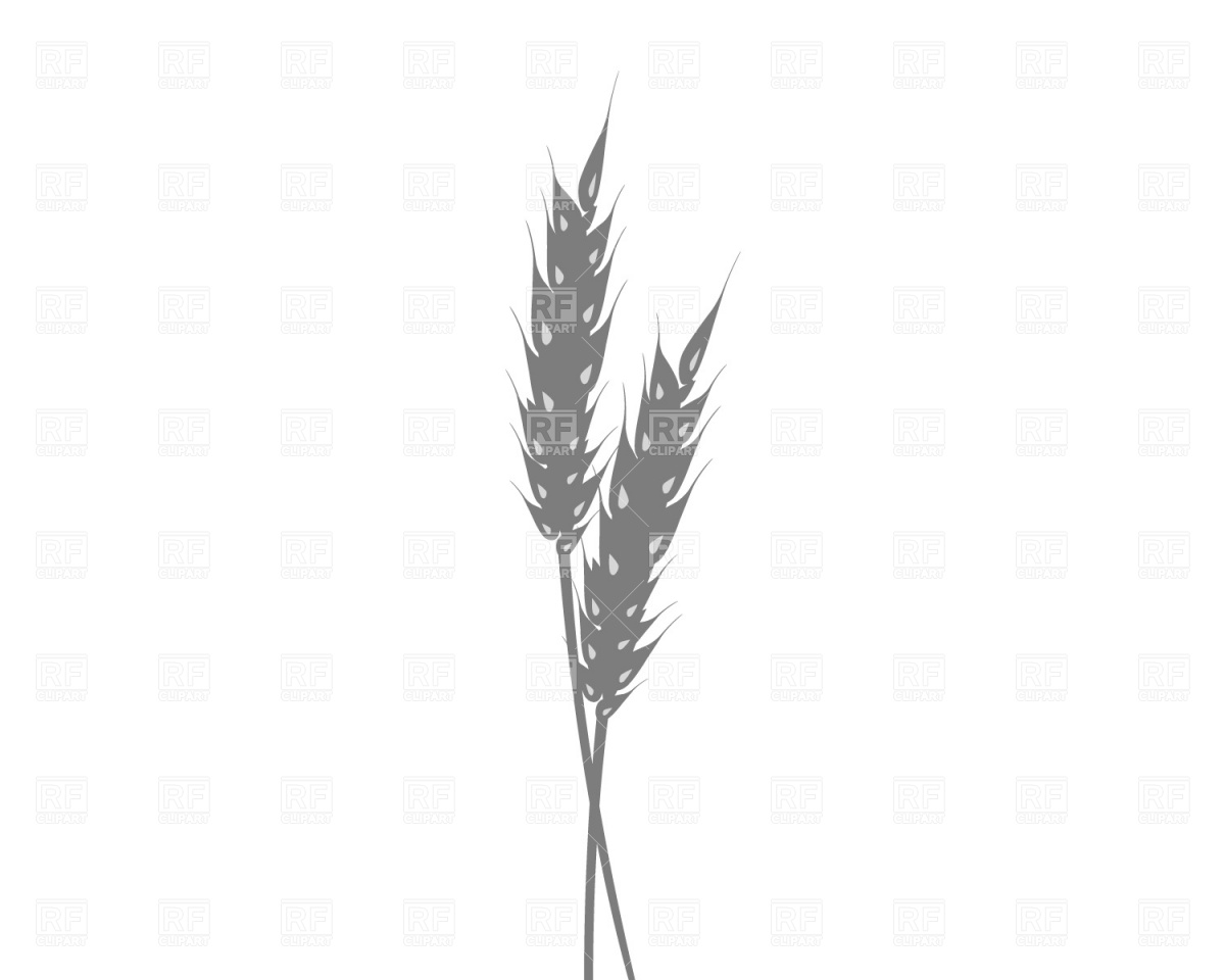 Ear Of Wheat Download Free Vector Clipart  Eps