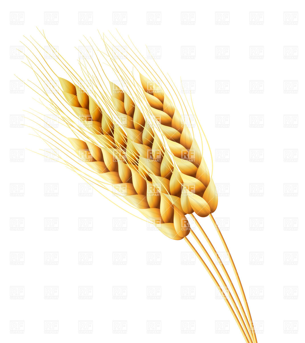Ears Of Wheat Or Rye Download Royalty Free Vector Clipart  Eps