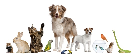 Group Of Pets Together In Front Of White Background   Trinity