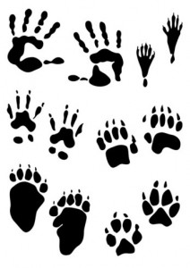 Paw Prints Clip Art Muddy Animal Tracks Graphic Clipartandcrafts Co
