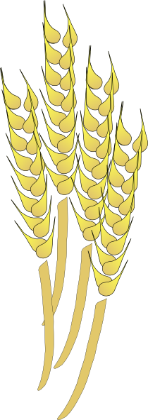 Wheat Clip Art At Clker Com   Vector Clip Art Online Royalty Free