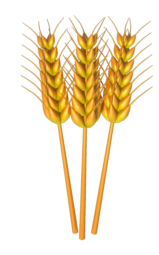 Gluten-Free Grains Clip Art