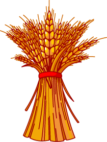 Wheat   Clipart Best