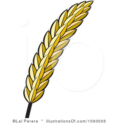Grains of Wheat Clip Art