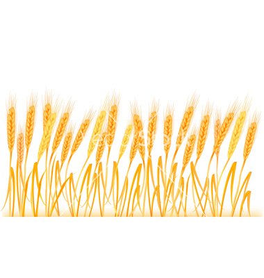 Wheat Field Clipart – Cliparts