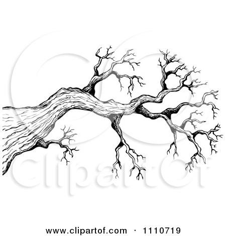 Clipart Black And White Sketched Bare Tree Branch   Royalty Free