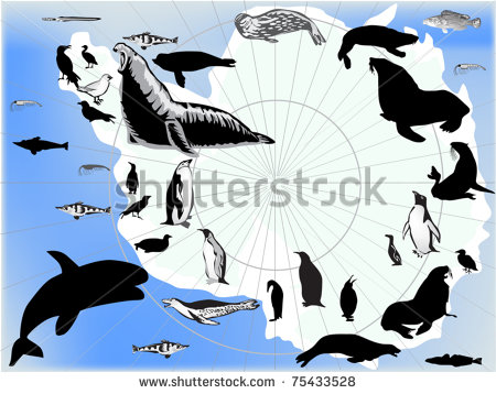Antarctica Animals Stock Photos Antarctica Animals Stock Photography
