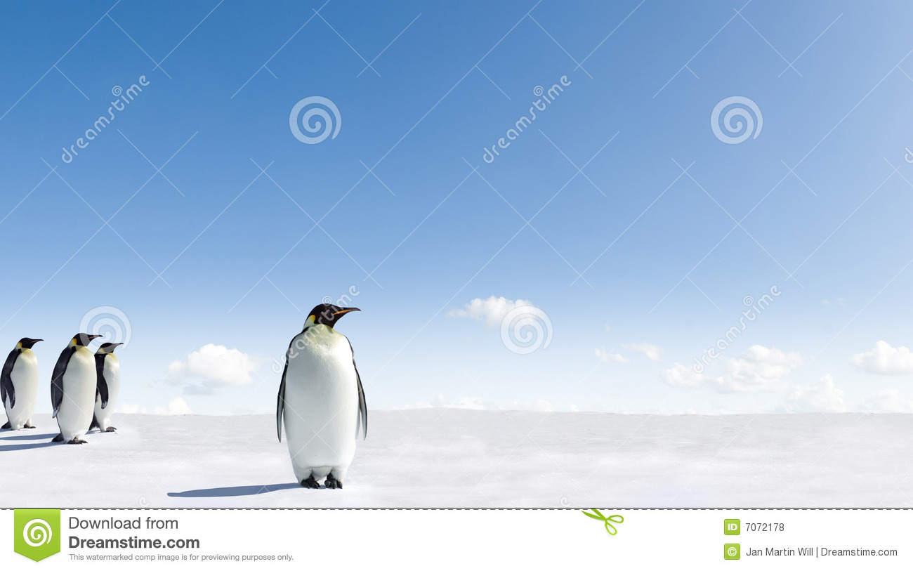 Of Group Of Emperor Penguins Walking On Snowy Landscape Of Antarctica
