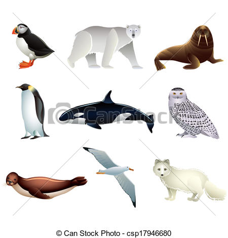 Vector Of Arctic Animals Vector Set   Popular Arctic Animals High