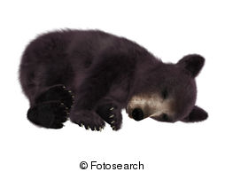 American Black Bear Illustrations And Clipart