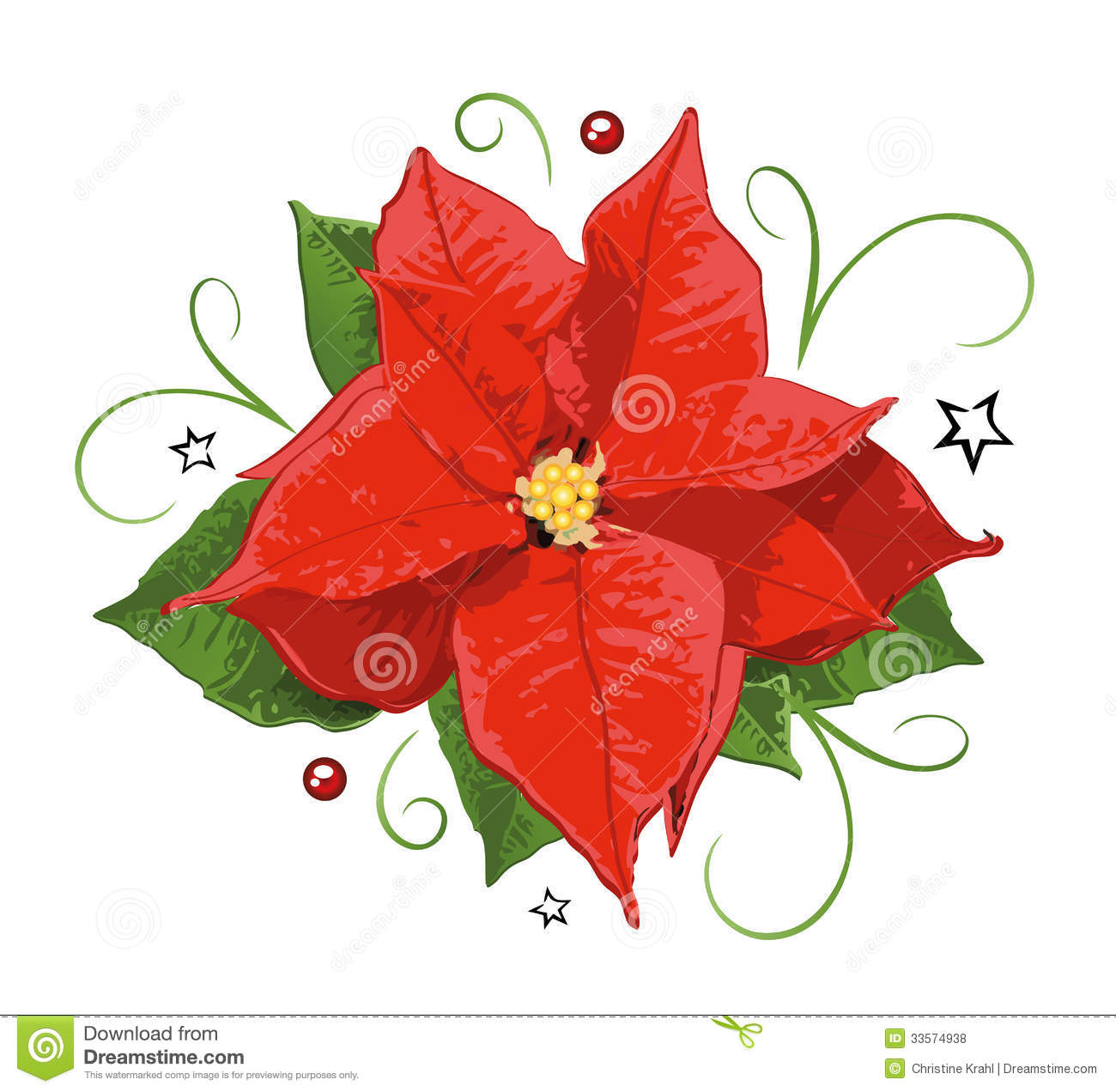Christmas Poinsettia Holly Royalty Free Stock Photos   Image