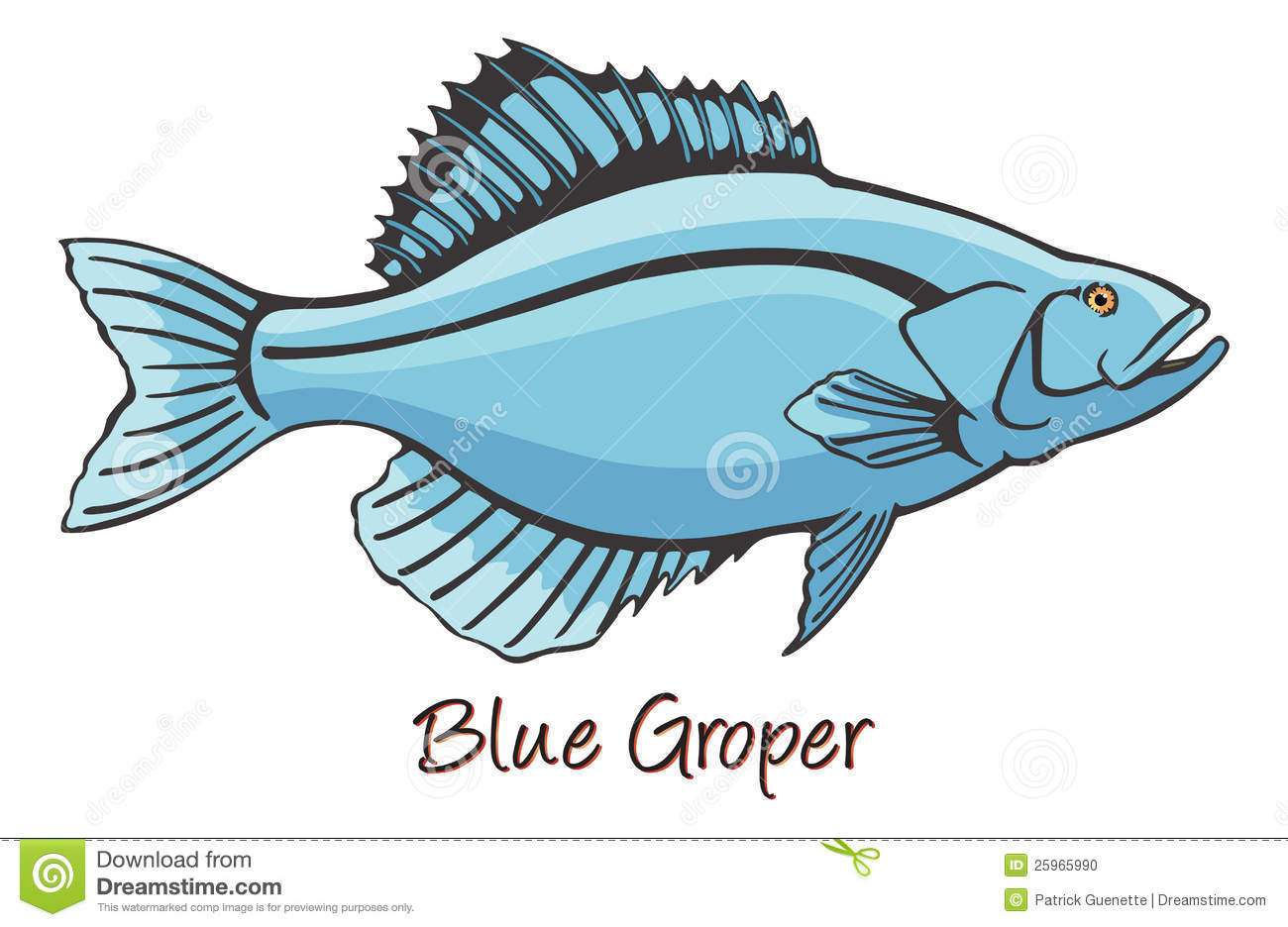 Grouper Color Illustration Stock Photo   Image  25965990