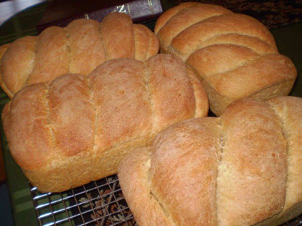 Award Winning 100  Whole Wheat Bread  2 Loaf