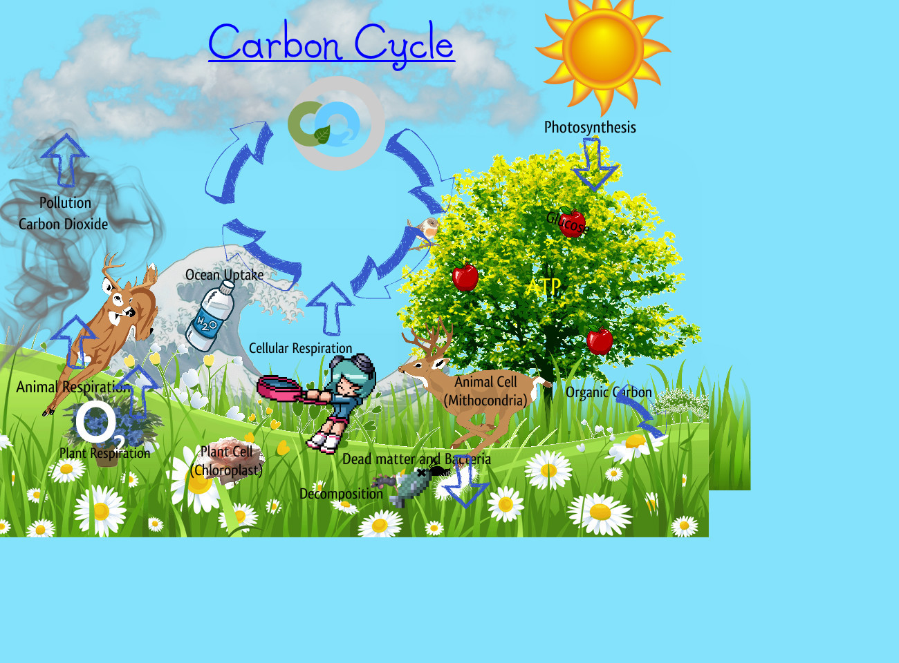 Carbon Cycle   Publish With Glogster