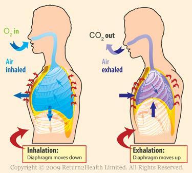 Inhalation And Exhalation Diagram Picture Book Covers