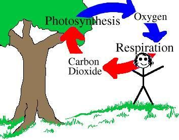 The Oxygen Cycle   Hydrology Unit   Pinterest   Worksheets Plants And