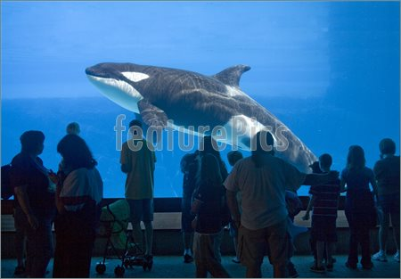 Whale Watching Image  Picture To Download At Featurepics Com