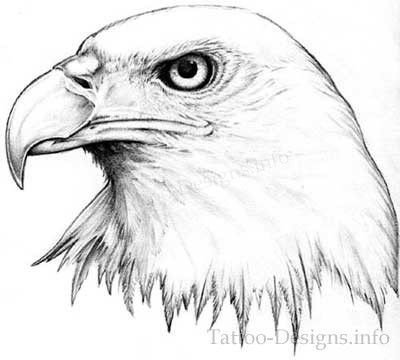 Black And White American Bald Eagle Head Tattoo Sketch   Pin It
