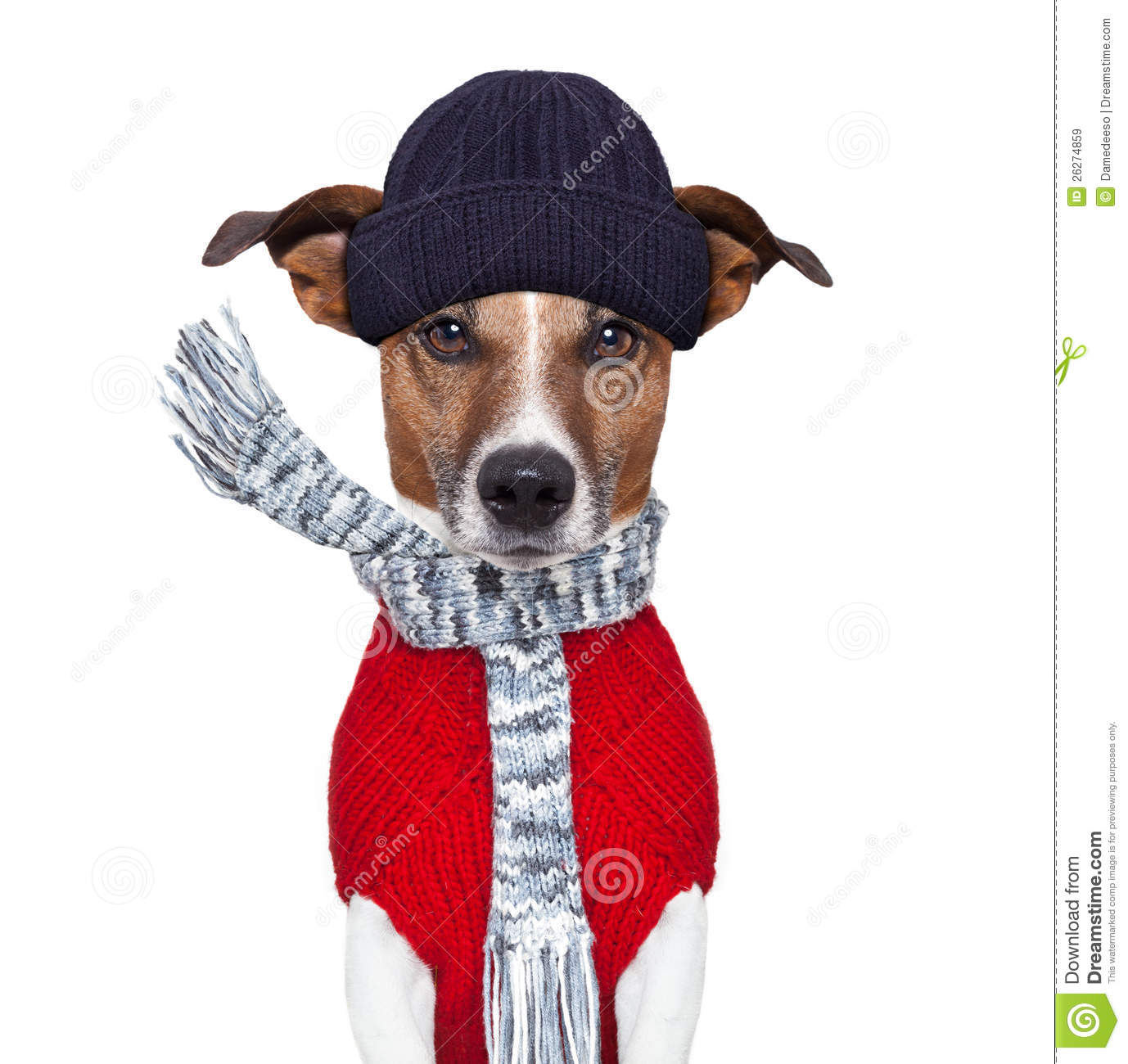 Royalty Free Stock Images  Winter Dog Scarf And Hat