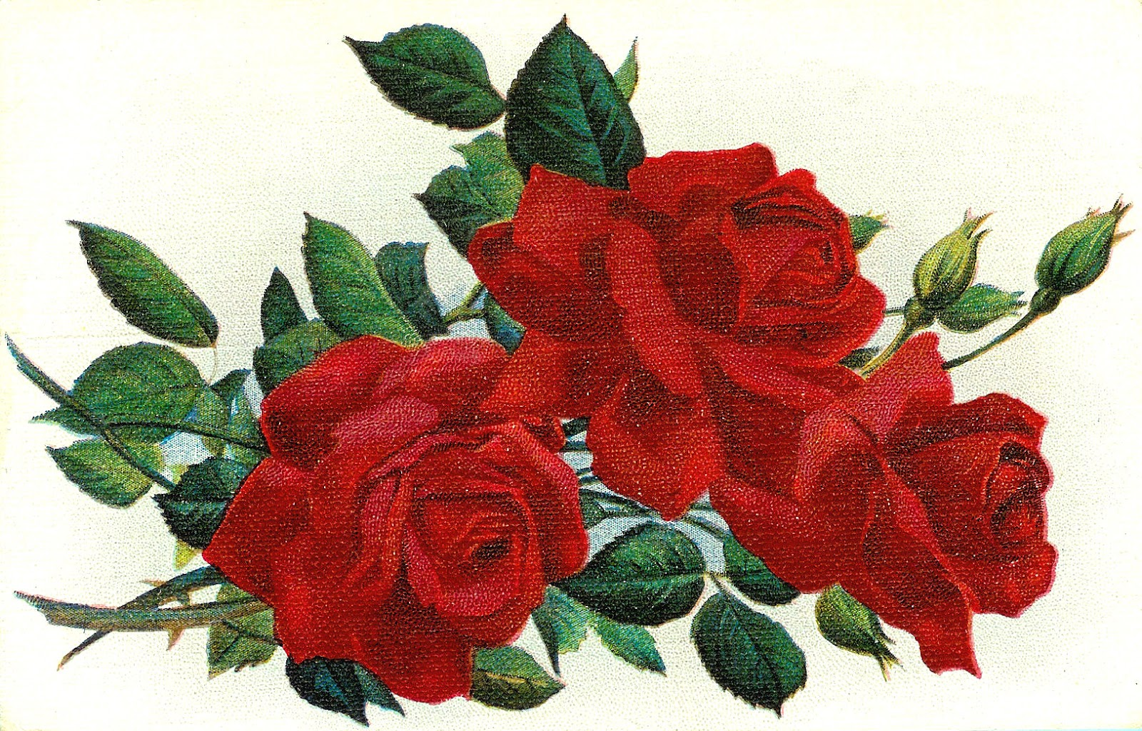 Love Roses  This Is An Absolutely Gorgeous Red Rose Graphic That Was