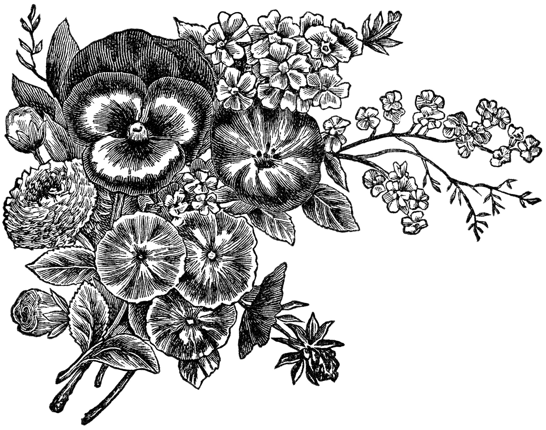 Black And White Flowers Borders Clipart - Clipart Kid