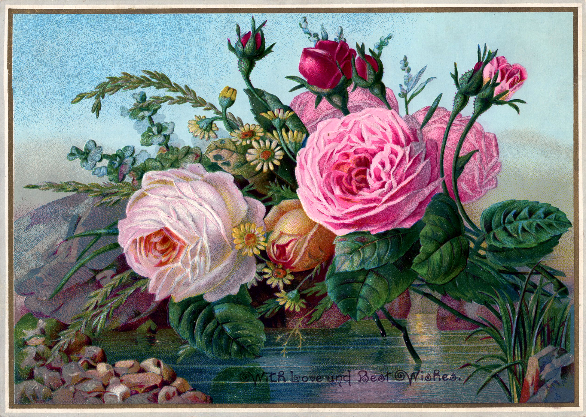 Free Public Domain Vintage Image   Stunning Roses   The Graphics Fairy