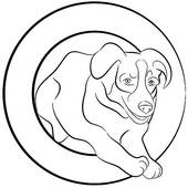 Border Collie Dog Jumping Through Hoop   Clipart Graphic