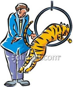 Circus Tiger Jumping Through A Ring   Royalty Free Clipart Picture