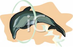 Dolphin Jumping Through A Hoop Clip Art Image